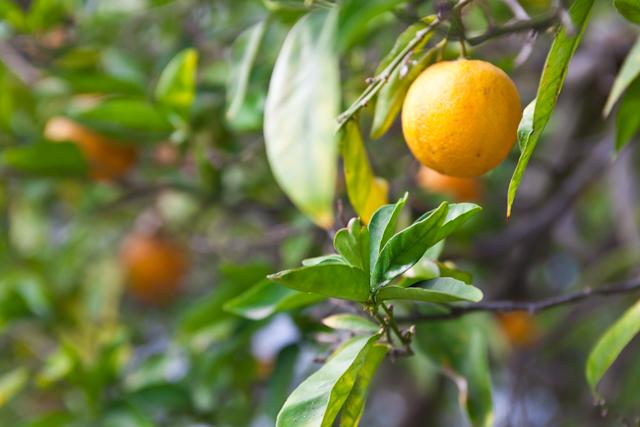 OrangeMintPancakes_003